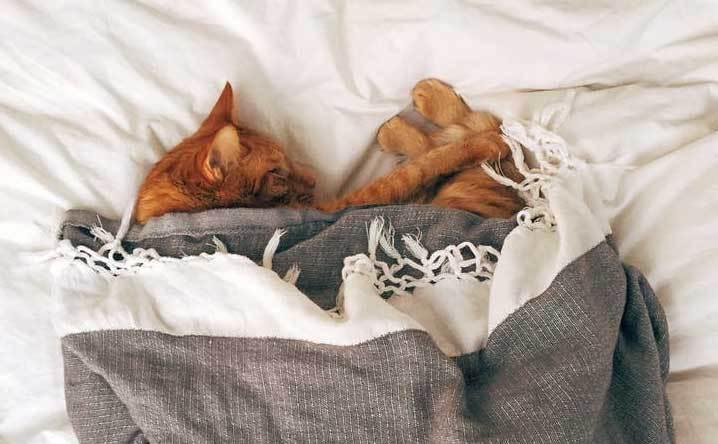如何不让喵星人睡在自己的床上