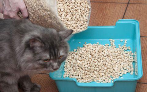 如何训练小猫使用猫砂盆?