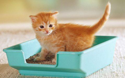 猫砂盆使用注意事项:能做和不能做的事情