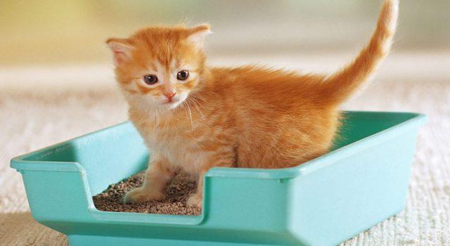 猫砂盆使用注意事项:要做和不要做的事情