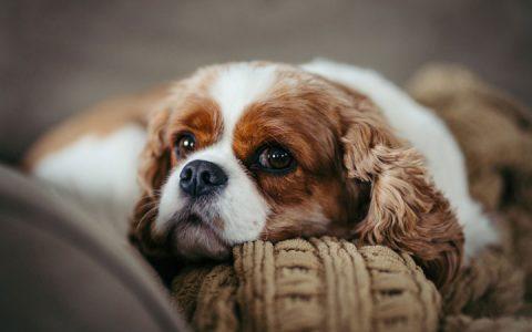 两种方法判断自己的狗狗是否发生脱水了