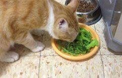 猫咪可以吃蔬菜么?哪些能吃哪些不能吃?