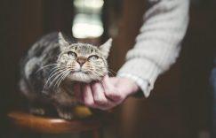每只猫也想有自己的专属奴才,若然你胆敢去「侍候」另一只猫,那真是勇气可嘉.....