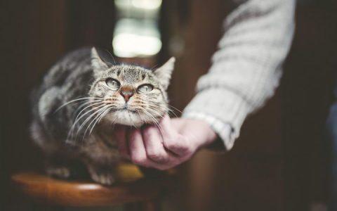 大王猫教你五招让猫咪更喜欢你
