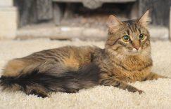 如何防止猫咪抓地毯