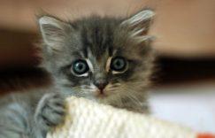 小猫咪拉肚子拉稀了怎么办?