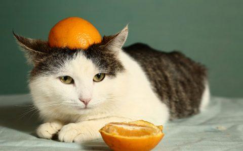 猫咪维生素缺乏症有哪些症状表现和治疗方法
