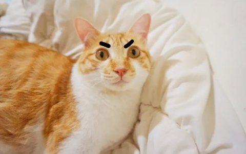 【晒猫图】论眉毛的重要性