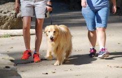 问题三:推车带狗狗出门的效果是不是等同于散步?