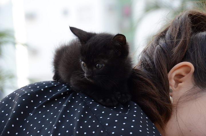 如何阻止自己成为猫咪的垫子?