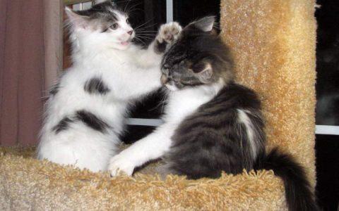 经常打猫咪会有哪些后果?