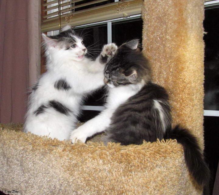 经常打猫咪会有哪些后果?打宠物猫会让猫咪不信任你