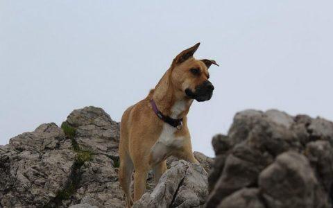 带狗狗郊游爬山前需要准备的8件事