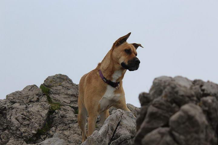 带狗狗郊游爬山,还可拍下不少好看的照片