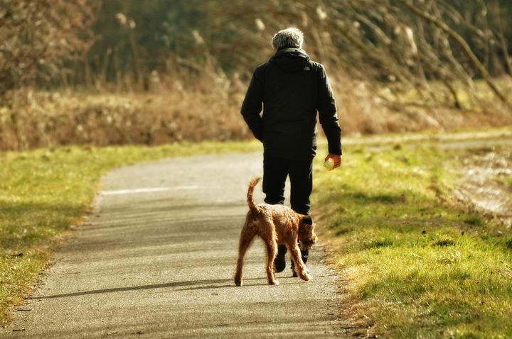 在选择路线时,应考虑到狗狗是否应付得来。