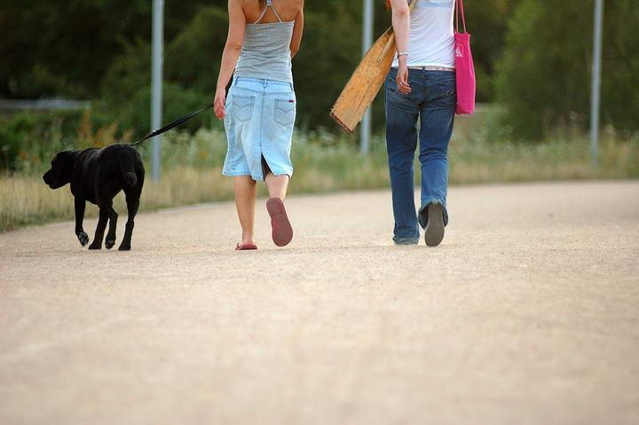 纵然在郊区,也应先系好狗带,到平坦的地方才让狗狗自由奔跑。