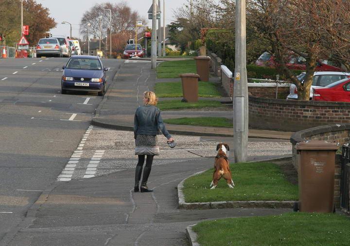 狗主人应该要主动清理狗狗的粪便,不能因为在郊外就放任。