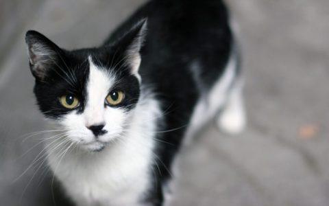 猫咪患艾滋病的初期症状和如何照顾艾滋猫