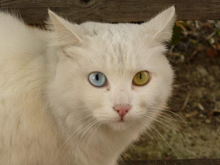 预防传染给其他猫以及维持良好生活品质是照顾艾滋猫最重要的目标