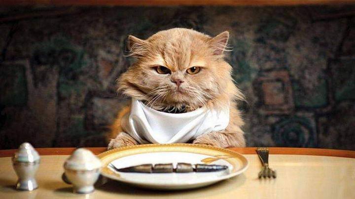 宠物猫咪狗狗大鱼大肉吃多了容易得病
