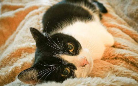 哪些原因会导致猫咪血尿?