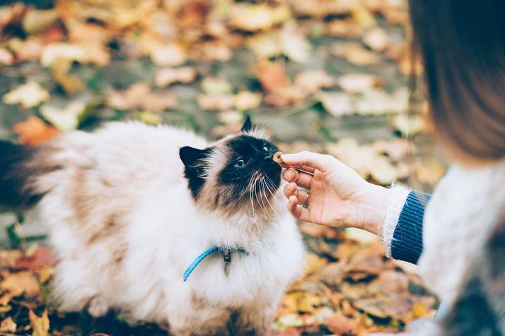 如何做好猫咪乳腺癌的预防工作