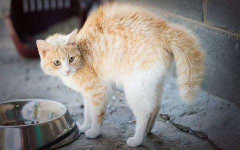 为什么你家的猫咪会护食?猫护食在表达什么