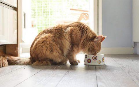 哪三种类型的猫咪更容易护食?