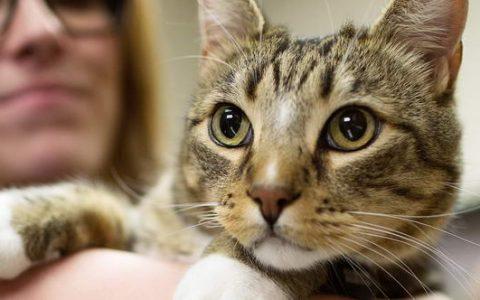 猫咪糖尿病的预防工作