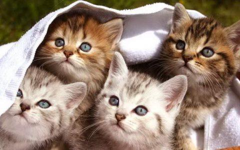 新生小猫的7个照顾技巧,如何照顾刚出生的幼猫