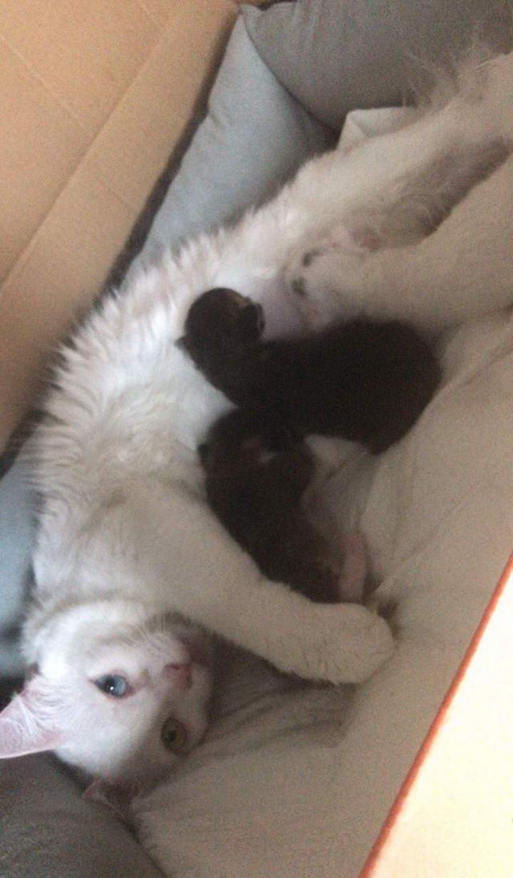 【分享】猫妈为了照顾三个娃真是操碎了心