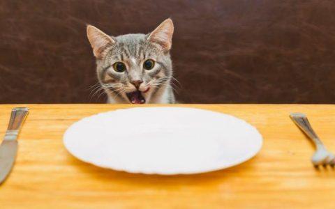 为什么猫咪吃干猫粮的时候狼吞虎咽?宠物猫吃太快怎么办