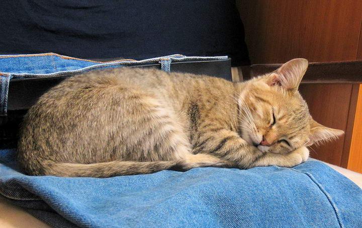 类固醇类药物对宠物猫有哪些副作用