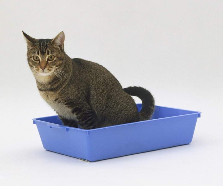 准备足够的猫砂是最重要的事,不然猫咪会不高兴。