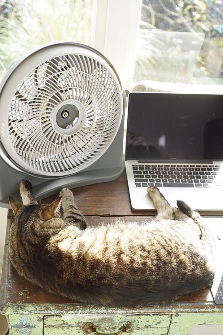 夏天湿热,风扇许多时都未能令室内温度下降。