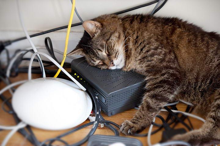 猫咪总是乱咬东西,在电线上洒些刺鼻的液体,猫咪便会避开。