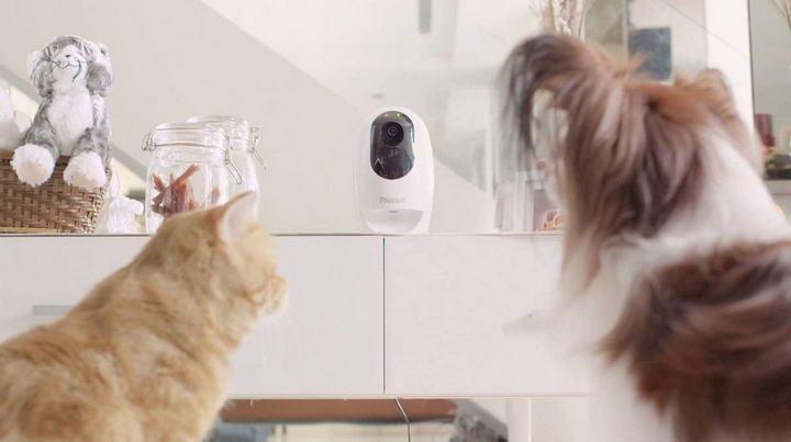 IP CAM除了可监察家中情况外,亦可看到猫咪在家中是否安全。