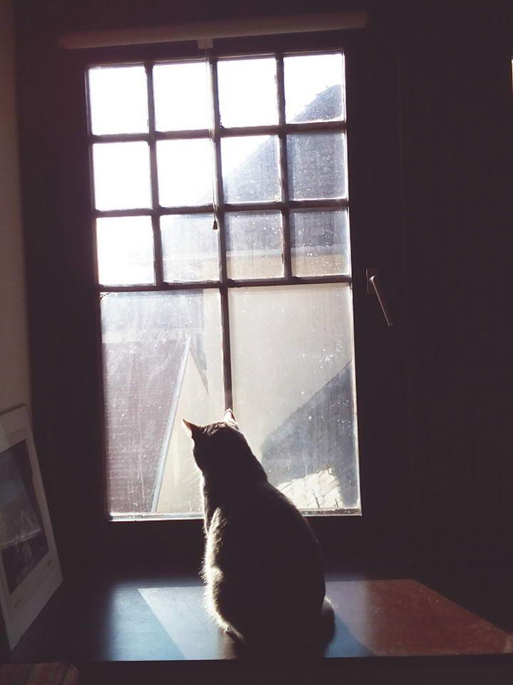 猫咪是充满好奇心的小动物,如要外出时,一定要将门窗关好。