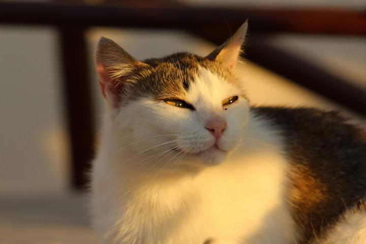 为什么猫咪喜欢晒太阳?宠物猫晒太阳的好处