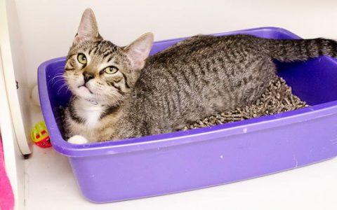 猫砂盆多久清理一次