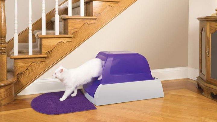 猫砂盆一般放在什么位置比较好?