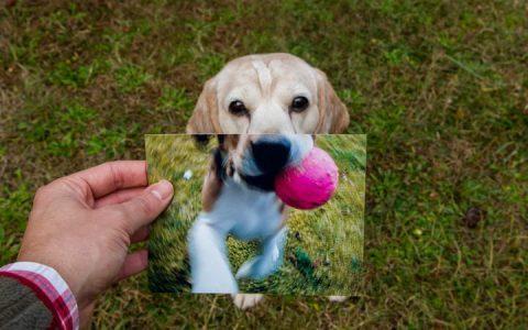 狗狗年纪大了,也该换种运动方式了:老年狗的运动建议
