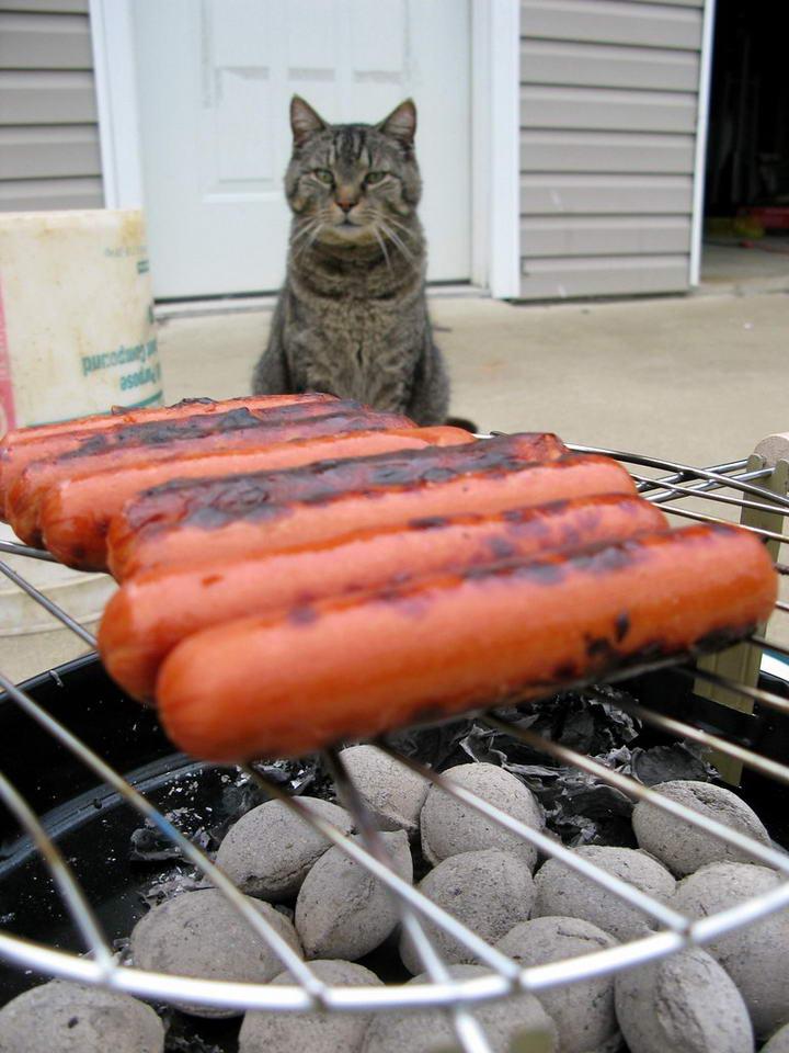 猫咪能吃烧烤烤肉吗?