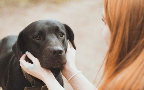 为什么有的狗狗在家活泼好动却不愿意出门?