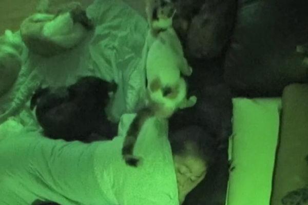 Bbooyong会在半夜趁女主人熟睡时对它喷尿!(图/翻摄自Youtube@SBS TV동물농장x애니멀봐)