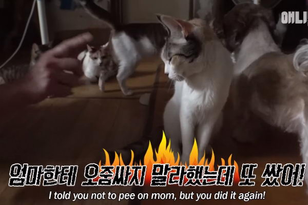 即使被骂也无动于衷!(图/翻摄自Youtube@SBS TV동물농장x애니멀봐)