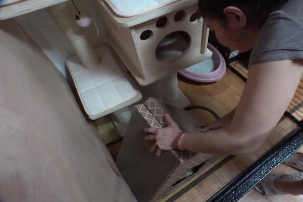 得知它的心情后,主人们立刻为它准备专属的猫跳台、猫砂盆以及猫抓板,也会多陪它玩,就是希望它能开心!(图/翻摄自Youtube@SBS TV동물농장x애니멀봐)