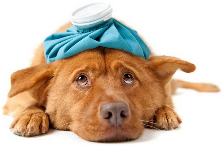 狗狗常见的体内寄生虫有哪些?