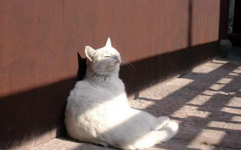 如何防止猫咪晒太阳过度?宠物猫中暑预防