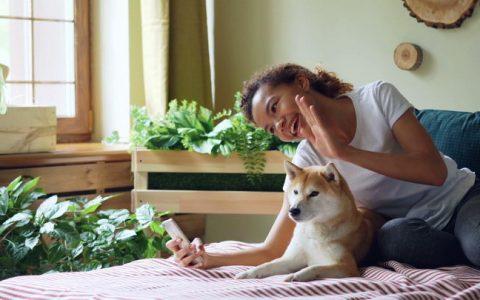 当你跟狗狗视频通话的时候,狗狗能认出屏幕中的你么?